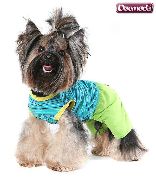 Одежда для собак в четырех лапах